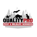 Peekskill Wildlife Removal